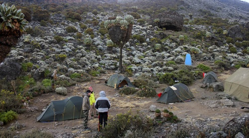 Image Kili machame et grands safaris