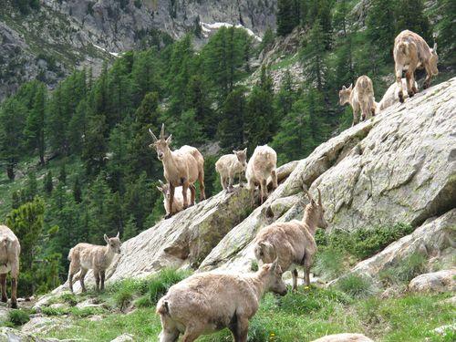 Image Lacs, ânes et loups dans le mercantour