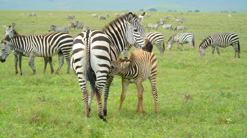 Image Bush tanzanien et vallée du rift