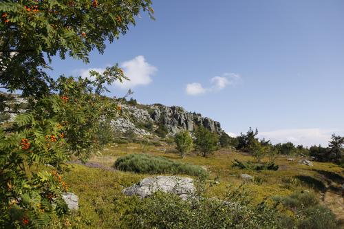 Image La montagne ardéchoise avec un âne