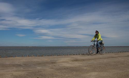 Image La camargue à vélo en famille