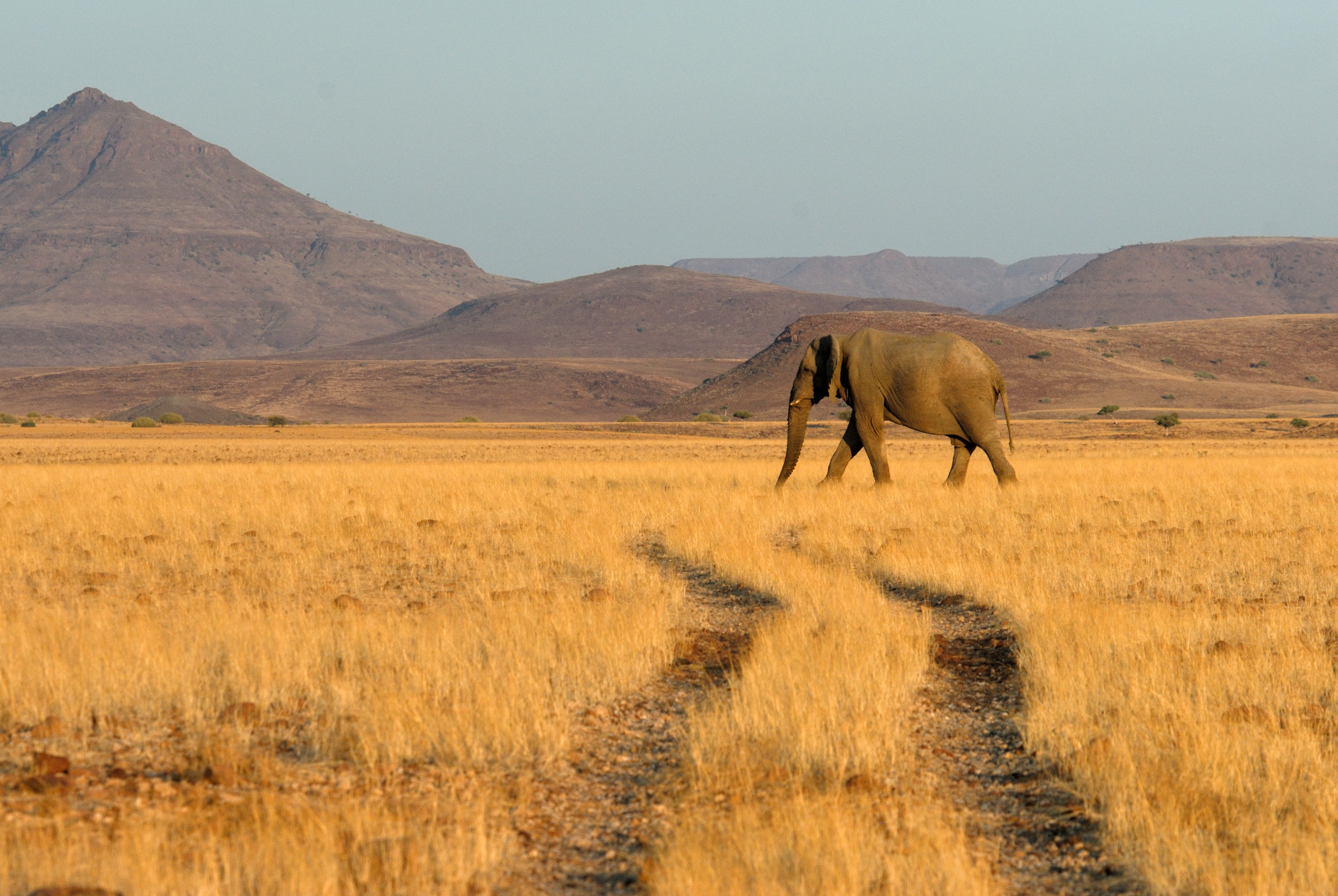namibie safari